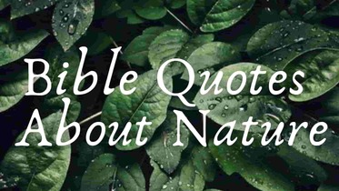 Bible quotes about nature